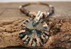 Picture of Bohemian Inca Pearl Beaded Necklace Ash