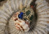 Picture of Bohemian Inca Shell Beaded Necklace Rustic