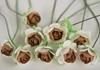 Picture of Scrappy Do Rose Blossom Small Embellishment Cappucino And White